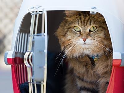 Cat inside travel carrier