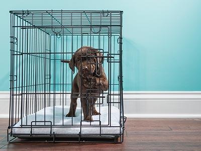 Lab puppy in a crate