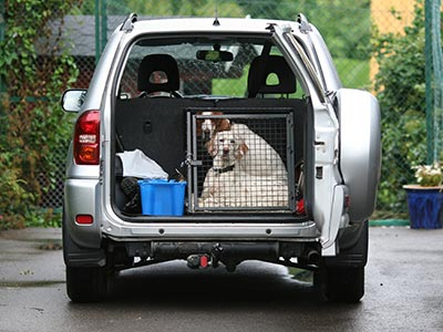 Dog in travel crate in SUV
