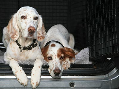 Two dogs in the back of an SUV