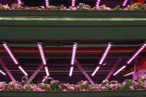 Illumitex pink LED lighting