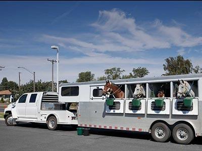 Horse trailer behind white truck